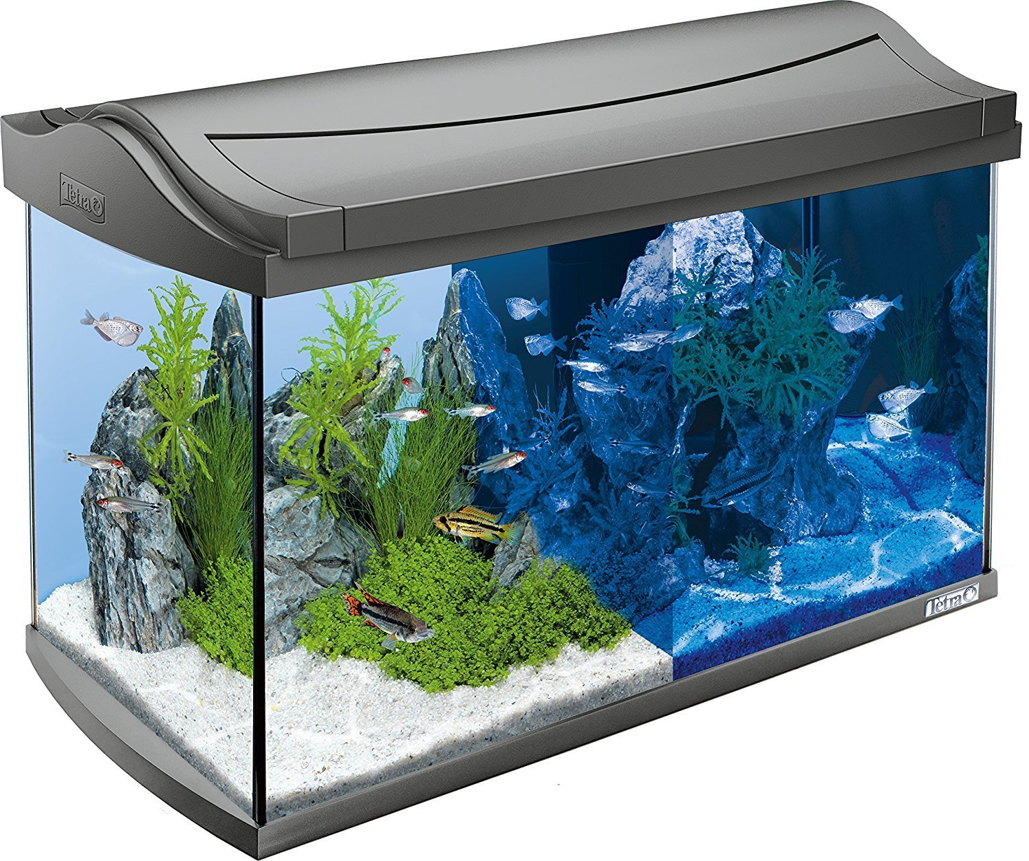 Tetra aqua art led aquarium 60l kopen frank for Aquarium 80 litres
