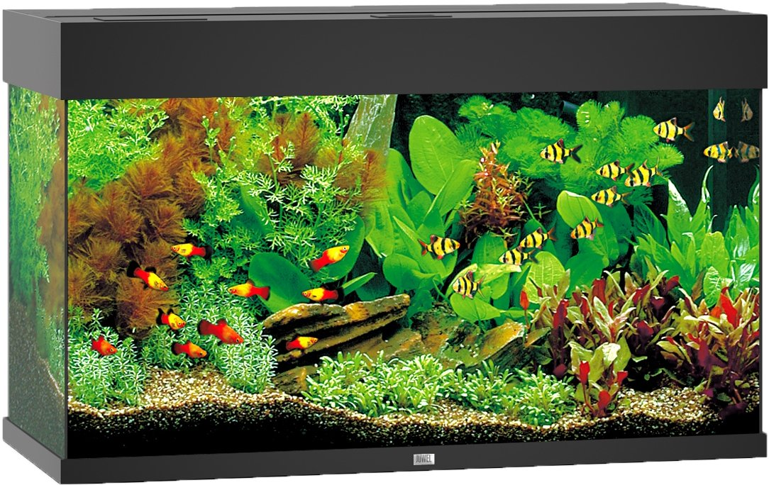 juwel rio 125 aquarium kopen aquarium frank. Black Bedroom Furniture Sets. Home Design Ideas