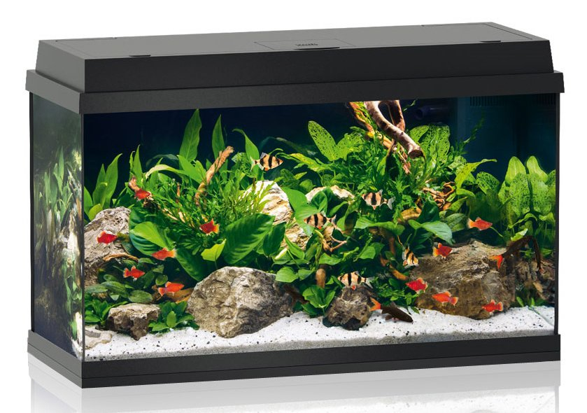 juwel primo 110 led aquarium kopen frank. Black Bedroom Furniture Sets. Home Design Ideas