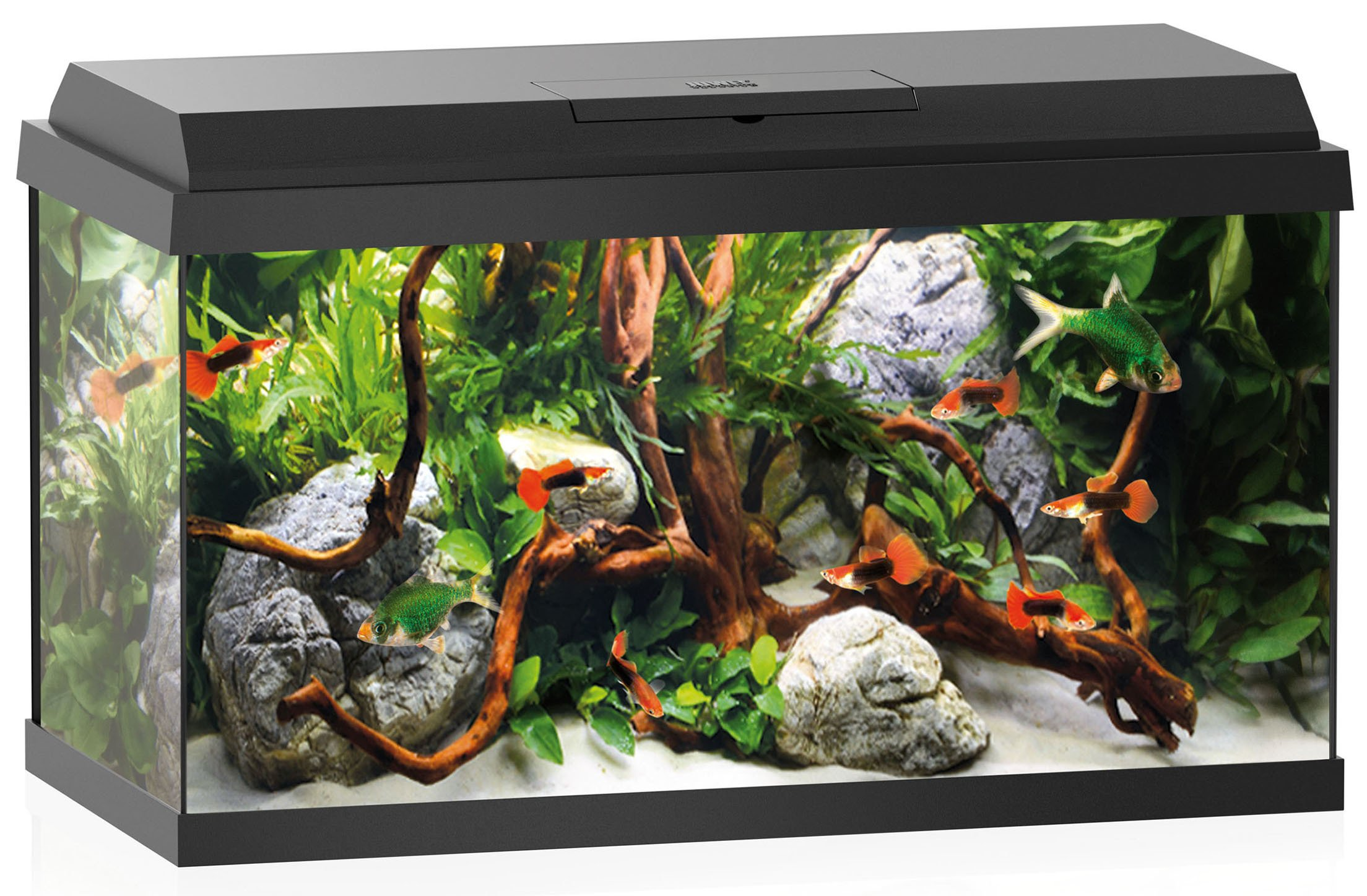 Juwel Primo 60 Led aquarium kopen?   aquarium experts nl   Frank